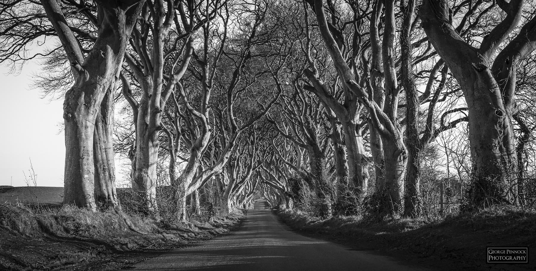 The Dark Hedges – Photography and Editing