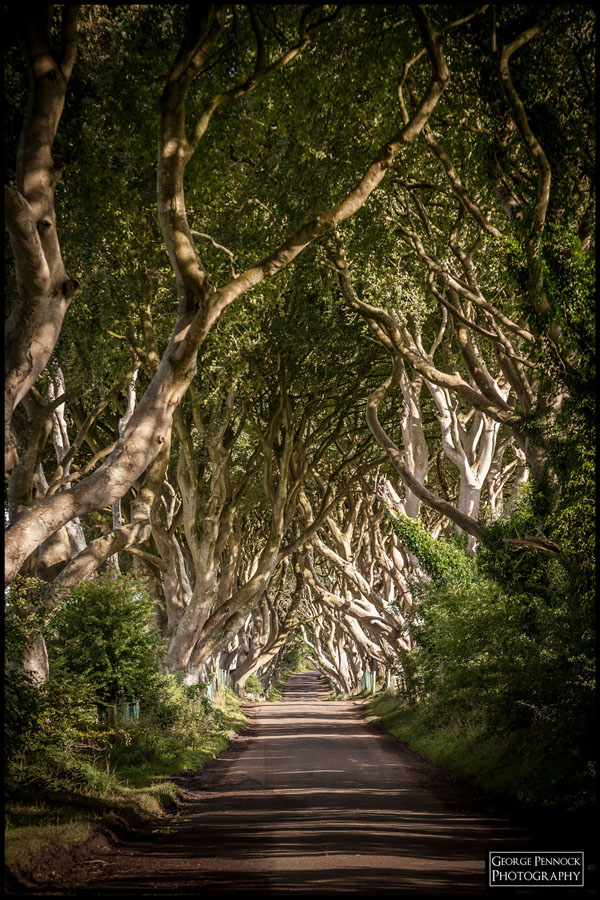 Northern Ireland Photographer - Dark Hedges